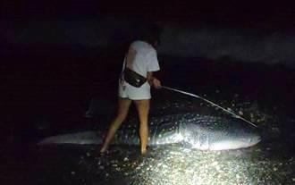 近4公尺長豆腐鯊擱淺台東沙灘!海巡署搶救時發現已明顯死亡