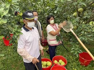 投資綠電也帶動原鄉農業 世豐電力打造花蓮立山文旦新品牌