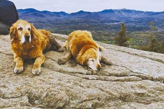 我家狗兒們的山居歲月