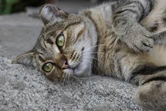 貓被棄養困空屋內 餓52天吃紙充飢 獲救後再也不相信人