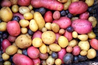 地瓜PK馬鈴薯  誰是正港減重王?  兩種吃法最消脂