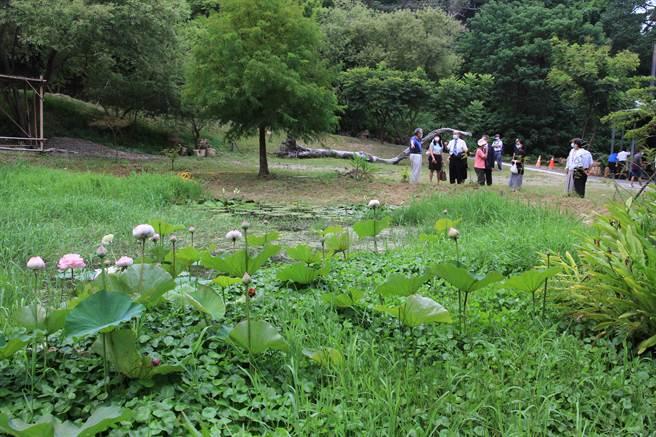 元培校園也有莫內花園,是推廣茶陶藝術養生新景點。(元培醫大提供)