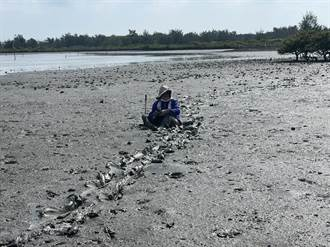 找新景點卻腳麻陷沙洲 海巡徒步踩爛泥500米救老婦