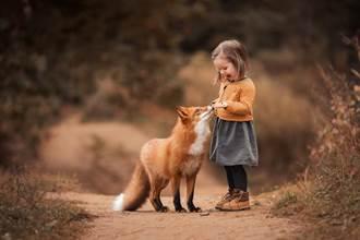 啟動馴化狐狸的開關