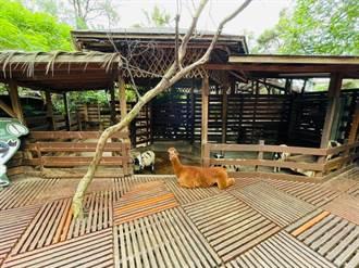 遭挨批虐待動物 淨園與動保團體、產學達成三共識