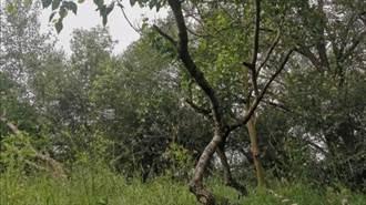 陸9歲男童殺7歲女童後屍體掛樹上?憑DNA定罪 雙方家長盼翻案