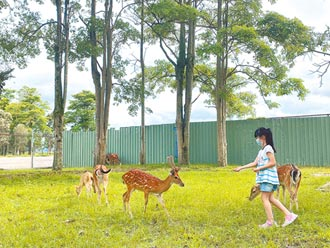 鹿野梅花鹿公園 打造奈良風情