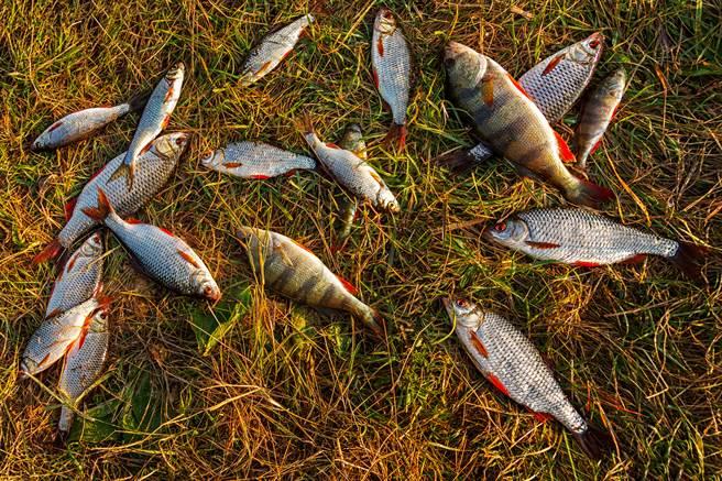 4樓住戶發現家中離奇淹水,甚至還出現好幾條魚。(示意圖/達志影像)