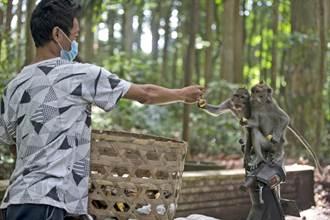 峇里島遊客大減 野生猴子為生計打劫當地村民