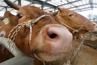 巴西出現非典型狂牛症 主動暫停牛肉出口