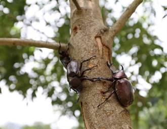 甲蟲果凍突少6顆憂誤食 爸爸一句神回女兒傻了