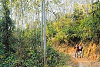 兩岸植林逾3萬公頃 華紙躍居碳匯富豪 身價看漲