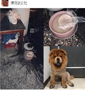 外送員食物用丟的精準命中狗碗 她搞笑客訴:碗沒打開狗狗怎吃?