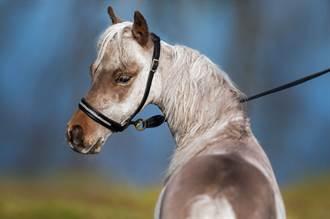 半夜返家驚見門前有匹馬 她一看傻了:這裡是台北耶