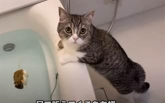 YouTube最紅的貓 獲金氏世界紀錄 超狂觀看數震驚全球