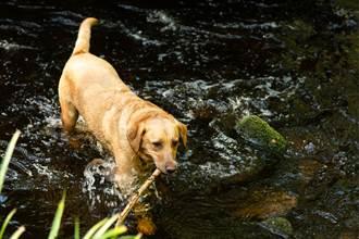 主人為救落水愛犬溺死 狗獲救守岸邊 含淚等候惹哭網