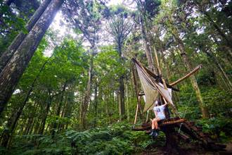 看了25年也不會膩 東眼山森林志工老師推薦大家「玩」森林遊樂區