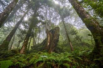 宛若走進阿凡達場景中 太平山有著全球最美步道之一