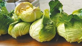 中央示警 嘉縣府籲農民改種青花菜