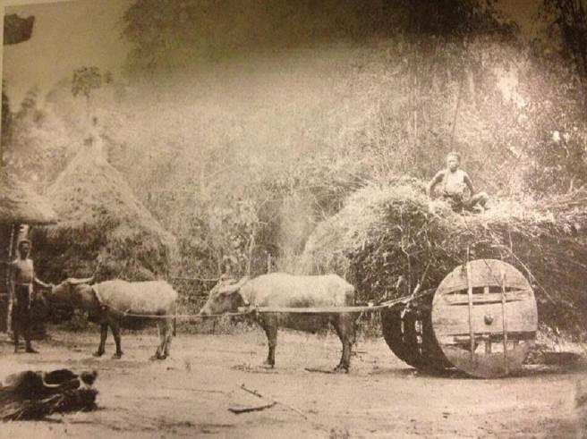 1875年美國外交官李仙得研究台灣的專文《李仙得台灣紀行》,2013年在台出版,書中收錄了李仙得親手繪製的台灣古地圖,更收藏不少當時原住民生活照片。圖為當時原住民的交通工具(牛車)。(圖/台史館提供)