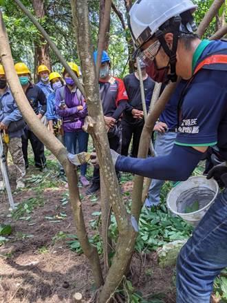 修剪景觀樹木均須有證照 台南4年培訓383位「護樹使者」