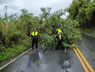 中颱璨樹來襲 花蓮多處路樹倒塌、逾2400戶停電