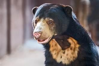 馬來熊見柵門關上飛撲阻擋 人性行為網笑噴:工讀生出來