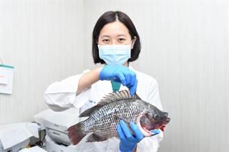 小心海鮮扎手!8旬嬤被魚鰭刺傷幾小時後竟衍生壞死性筋膜炎