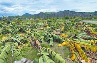璨樹橫掃蘭嶼 500多戶停電搶修