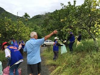 柚園豐收卻無力採收 志工送暖助售讓9旬老農安心過節