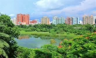 城市綠洲─洲仔濕地探訪水鳥後樂園