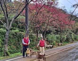 提升動物權 新北動保處號召民眾守護鄰里籠鏈犬