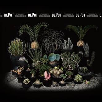 綠手指注意 超過80種珍稀塊根植物在這裡
