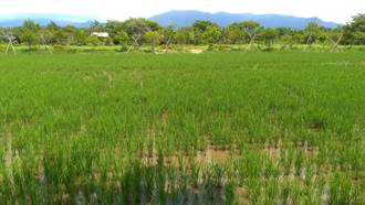 配合大糧倉政策 台南農改場至雲林推「水旱新輪作模式」