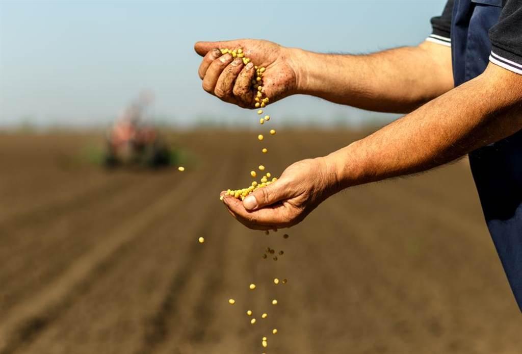 大陸不要老美肥單,改買超貴巴西大豆。(圖/達志影像)