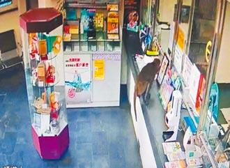 獼猴逛郵局、傷遊客 太管處籲別餵食