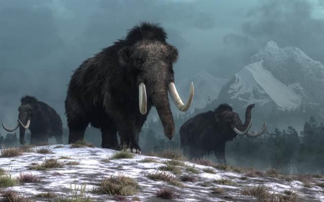 史前巨獸絕跡超過1萬年,科學家:6年內讓它復活。(圖/達志影像)