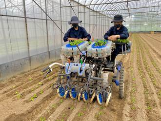 高雄成立蔬菜機械代耕團  「人機一體」解決缺工問題