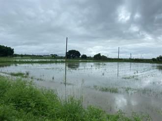連續降雨農田積水 台南地瓜遲遲無法開種