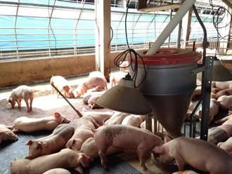 中秋禁烤肉 豬肉拍賣價降至每公斤72元