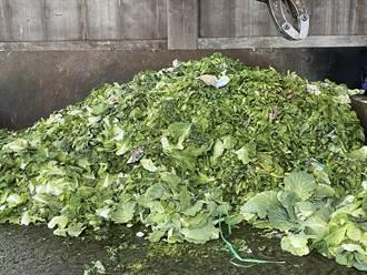 蔬菜量增反而賣不掉價格暴跌 北農6噸菜「當垃圾報廢」
