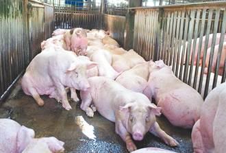 小型養豬場退場獎勵最高60萬 蔡壁如:土豪執法?