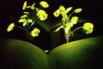 「潘多拉星球」植物成真  螢光植物亮度可照明