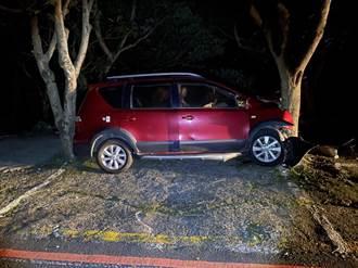 男子酒駕過彎撞路樹 車尾卡進2棵樹間「完美停車」