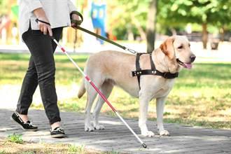 女主播才剛稱讚導盲犬很乖 下秒拉著牽繩慘仆街