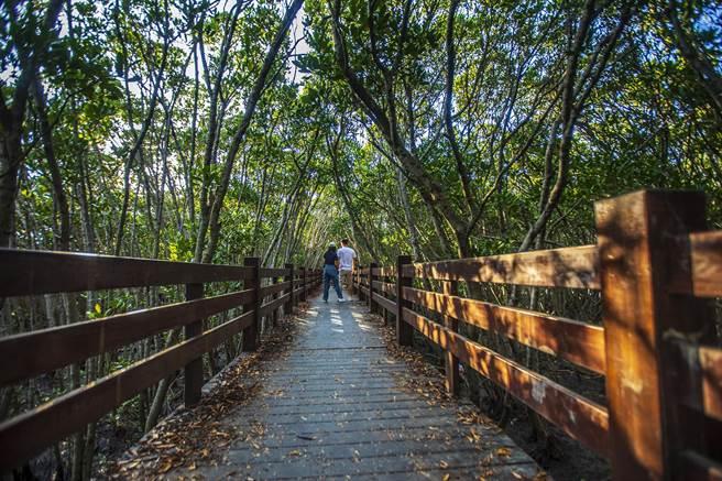 新竹縣新豐鄉紅毛港遊憩區的紅樹林「龍貓隧道」開放現人潮。(羅浚濱攝)
