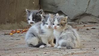 供車庫給貓一家暫住 幼崽頻被叼到門口 屋主驚覺心碎真相