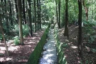 植物園方舟!嘉義樹木園規劃栽植本土稀有植物