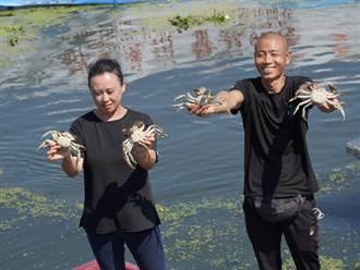 陽澄湖大閘蟹今開捕 湖蟹產量1575噸