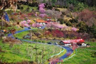 武陵農場提供11公頃廢耕地 啟動「櫻花鉤吻鮭棲地復育造林」計畫